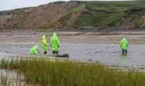 Результаты исследований Белого моря на наличие микропластика, проведенных молодыми экологами Поморья, пополнили научную базу данных