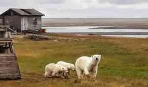 Метеостанцию на острове Вайгач подготовили к встречам с белыми медведями