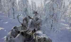 В конкурсной программе фестиваля Arctic open - 23 документальных фильма