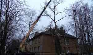 В ноябре в Архангельске убирают деревья, упавшие ещё в августе