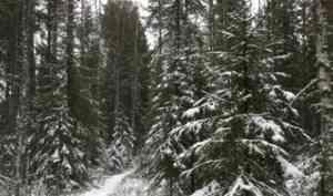 Министерство ЛПК Архангельской области: «План по воспроизводству лесов в 2018 году перевыполнен»