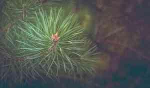 В уходящем году в Поморье восстановили 62 тысячи гектаров леса