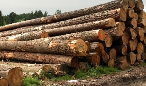 В Каргополе с предпринимателя взыскали 4 миллиона рублей за вырубку леса