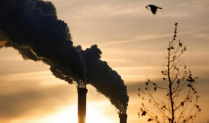 ВПетербурге власть поддержала экологический протест горожан