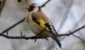 В Поморье стартовала всероссийская эколого-культурная акция «Покормите птиц!»