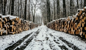 Мастера лесного участка в Плесецком районе обвинили в получении взятки