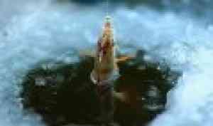 Кенозерский национальный парк приглашает на праздник «Налим Малиныч»