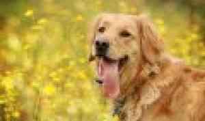 В Архангельской области реализуют федеральный закон об ответственном обращении с животными