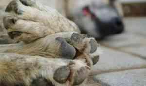 В Архангельске рассмотрят проект регионального закона об ответственном обращении с животными