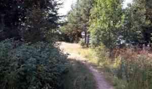 В Онеге появится первая экологическая тропа