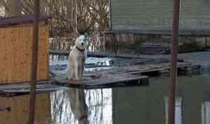 Вархангельской Маймаксе затоплены сразу несколько деревянных кварталов
